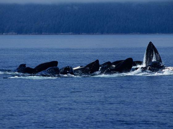 Whale-watching in Alaska