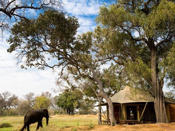 Wildlife at Xaranna Tented Camp