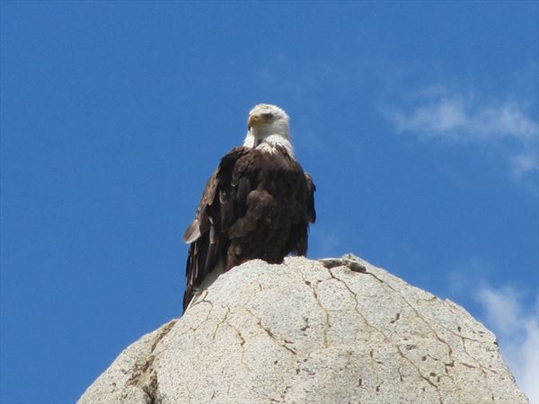 eagle in death valley