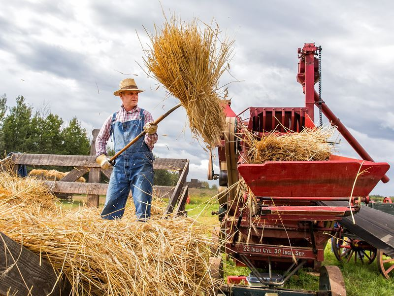 a farmer reenacts harvest season at the ukrainian cultural heritage village