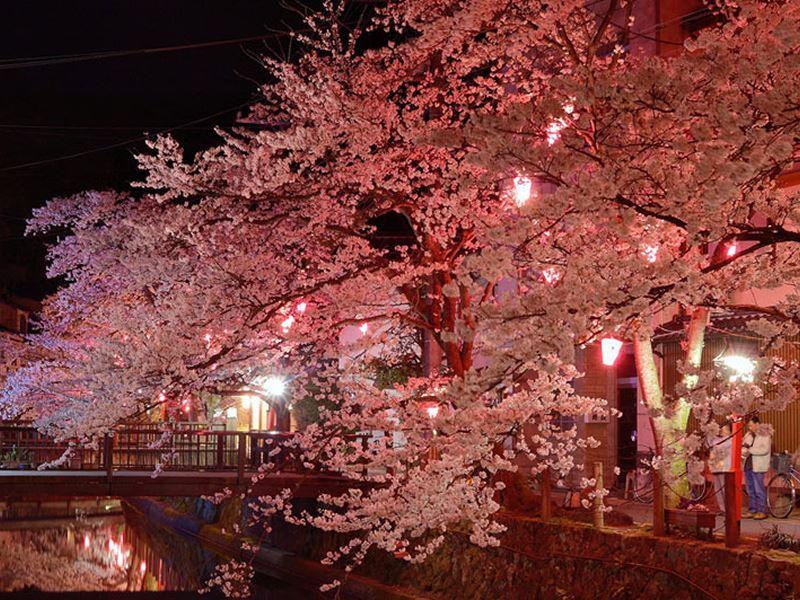 blossom kinosaki onsen night