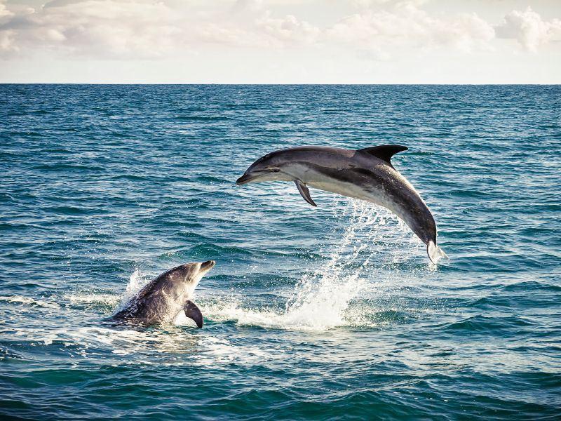 bottlenose dolphins bay of islands new zealand