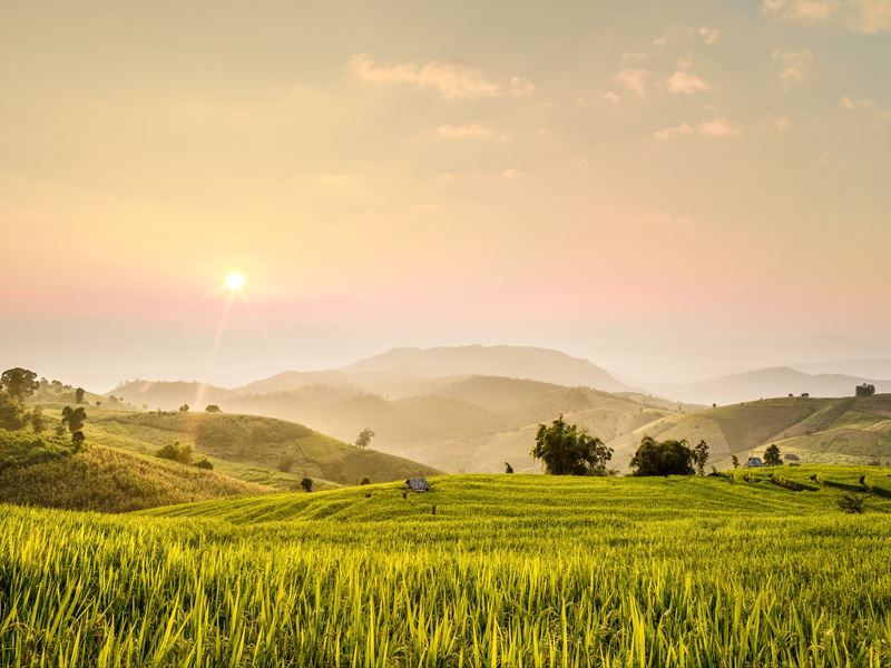 chiang mai province rice field landscape