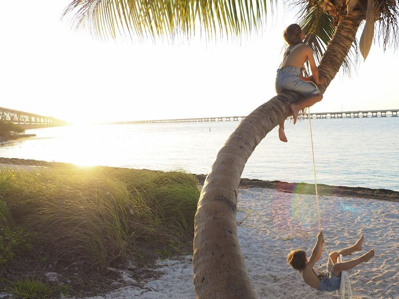 climbing palm trees in the keys