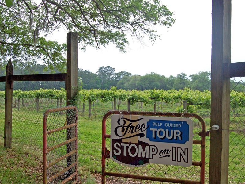 deep water vineyards charleston