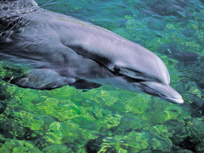 dolphin in fort myers