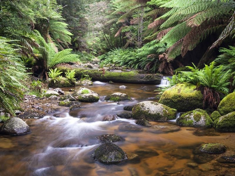 evercreech forest north eastern tasmania