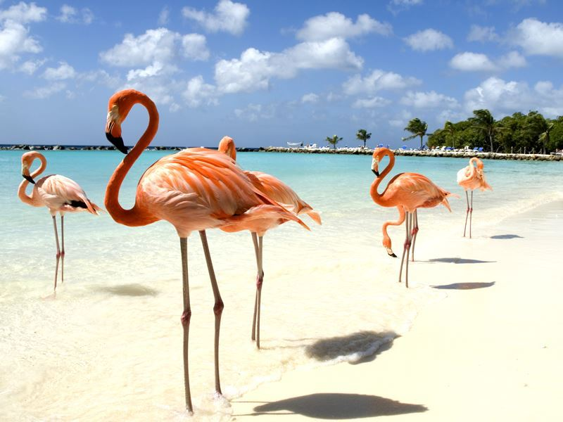 flamingos beach aruba