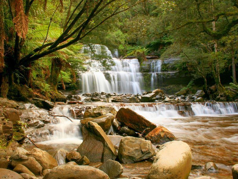 liffey falls tarkine region tasmania