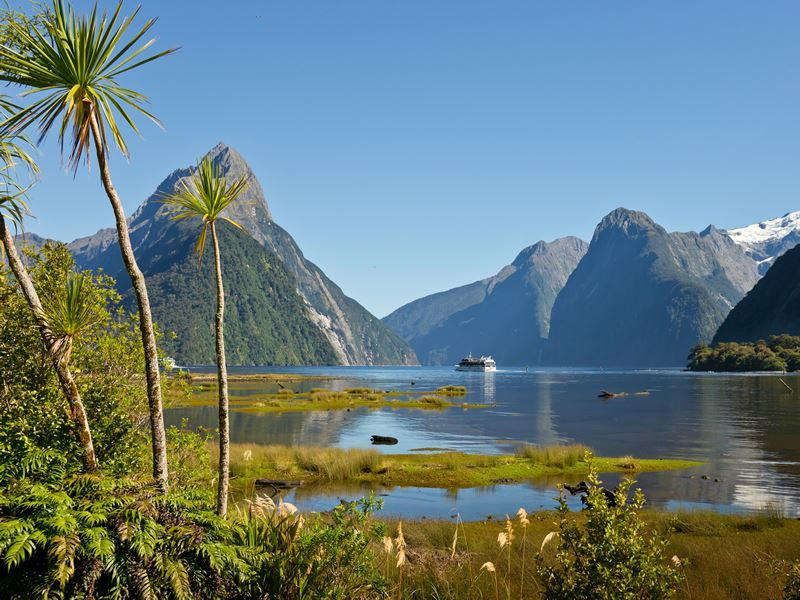 milford sound clear sky and palms new zealand