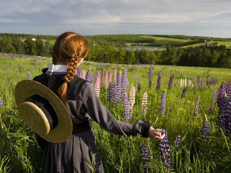 pei anne of green gables lupins