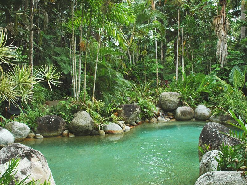 pool in the jungle daintree national park