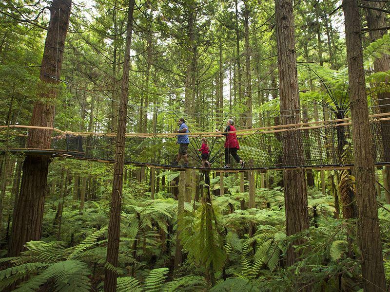 redwoods tree walk rotorua