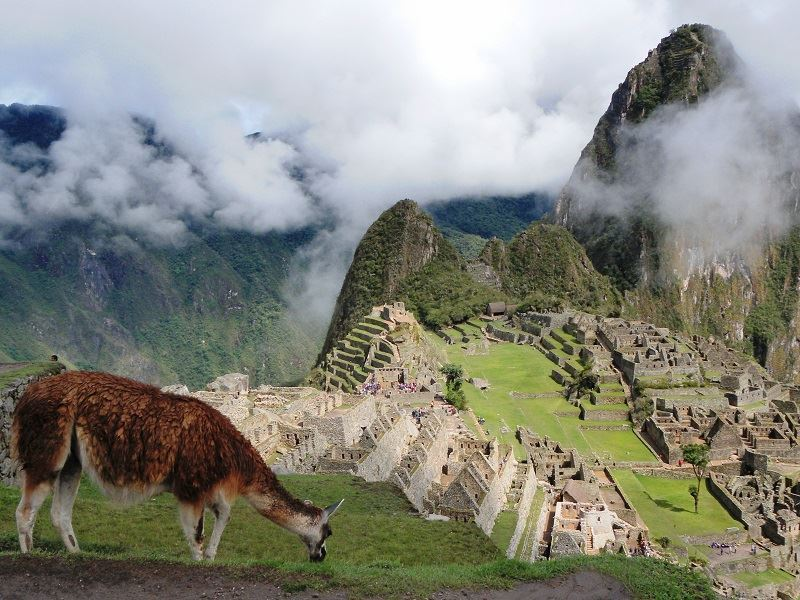 sacred valley machu picchu alpaca