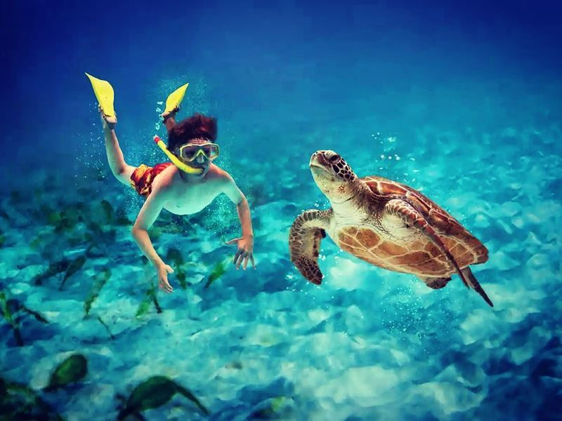 snorkelling with turtles in fort lauderdale