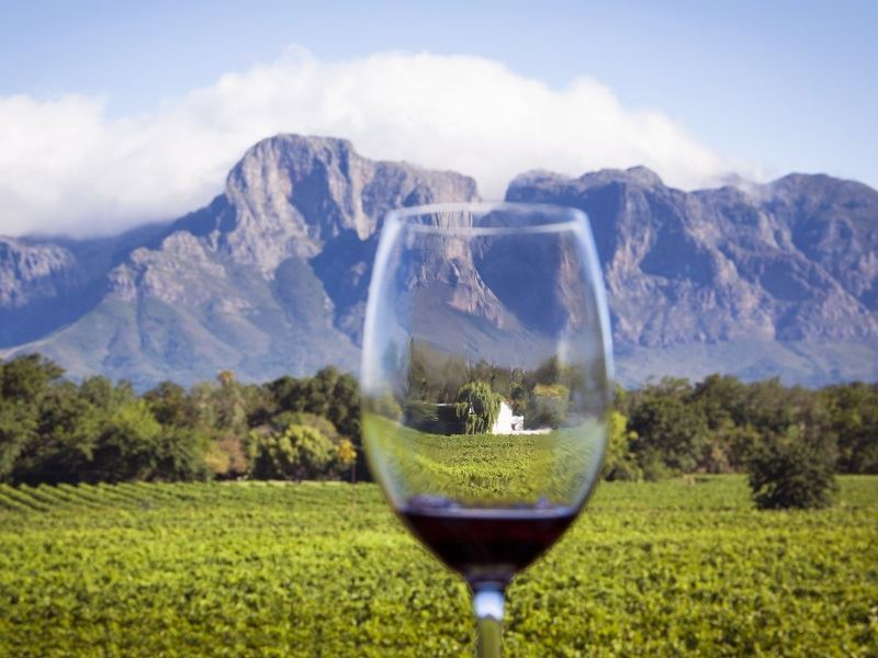 stellenbosch wine glass vineyard