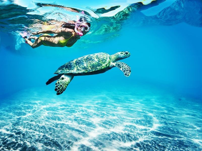 swimming with turtles in tobago