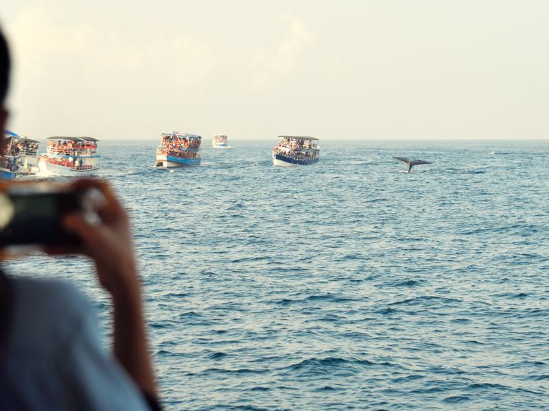 tourists whale watching sri lanka