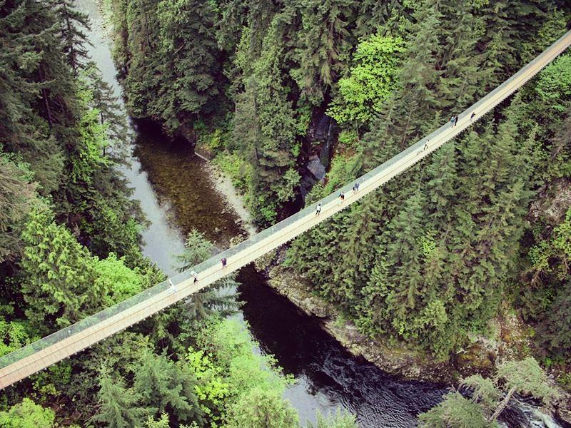 view of the capilano river suspension bridge park