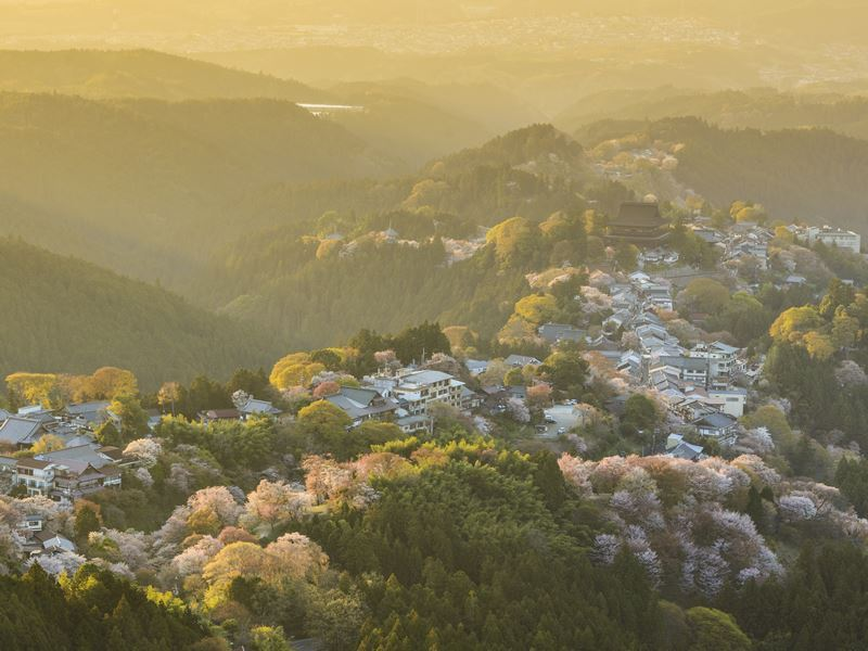 yoshinoyama in springtime