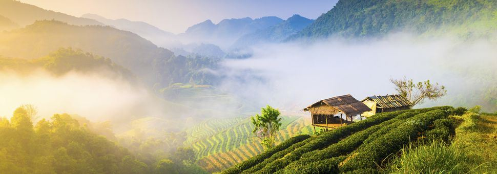 Misty morning in Chiang Mai
