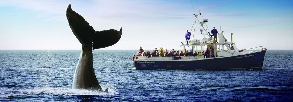 Whale watching off the Bay of Fundy